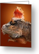 Lizard Greeting Cards - Lap Lizard Greeting Card by Jim Carrell
