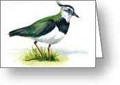 Lapwing Greeting Cards - Lapwing Greeting Card by Bev Lewis