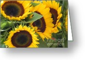 Flower Still Life Prints Greeting Cards - Large Sunflowers Greeting Card by Chrisann Ellis