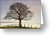 Loneliness Greeting Cards - Large Tree Greeting Card by Jon Baxter