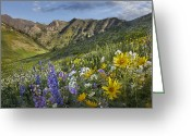 Blue Delphinium Greeting Cards - Larkspur And Sunflowers Albion Basin Greeting Card by Tim Fitzharris
