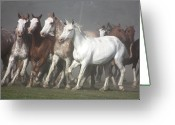 Wild Horse Greeting Cards - Las Tropillas Greeting Card by by Felicitas Molina