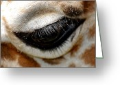 Wildlife Photos Greeting Cards - Lashes On The Eye Greeting Card by Skip Willits