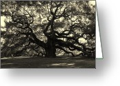 Black Greeting Cards - Last Angel Oak 72 Greeting Card by Susanne Van Hulst