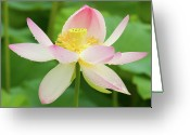 Lotus Leaves Greeting Cards - Last day of Blooming Greeting Card by Elvira Butler