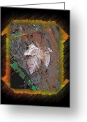 Arboretum Greeting Cards - Last Leaf Standing Greeting Card by Tim Allen