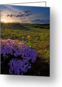 Balsamroot Greeting Cards - Last Light of Spring Greeting Card by Mike  Dawson