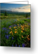 Lupine Greeting Cards - Last Light over the Wenas Greeting Card by Mike  Dawson