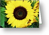 Oregon Art Greeting Cards - Last of the Sunflowers Greeting Card by Cathie Tyler