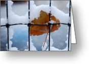 Expressive Photo Greeting Cards - Last One Greeting Card by Steven Milner