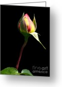 Rose Photos Greeting Cards - Last Rose Of Summer Greeting Card by Kathy Jennings