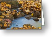 Autumn Colors Greeting Cards - Last Signs of Autumn 0438 Greeting Card by Michael Peychich