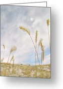Wild Grass Greeting Cards - Last Snow Greeting Card by John  Poon