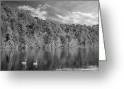 David Dehner Greeting Cards - Late Afternoon at the Lake - BW Greeting Card by David Dehner