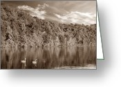 David Dehner Greeting Cards - Late Afternoon at the Lake - S Greeting Card by David Dehner