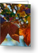 Red Fall Colors Greeting Cards - Late Autumn Colors Greeting Card by Stephen Anderson