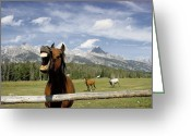 Neigh Greeting Cards - Laughing Horse Greeting Card by Porterfld and Chickerng and Photo Researchers 