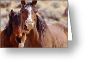 Quarter Horses Greeting Cards - Laughing Mom and Foal Greeting Card by SB Sullivan