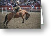Bronc Greeting Cards - Launch Greeting Card by Melisa Meyers