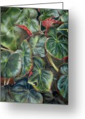 Giclee Pastels Greeting Cards - Lauras Begonia Greeting Card by Karen Boudreaux