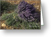 Essential Greeting Cards - Lavender Greeting Card by Bernard Jaubert