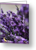 Purple Greeting Cards - Lavender Greeting Card by Cathie Tyler