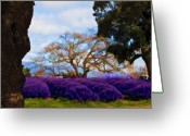Purples Digital Art Greeting Cards - Lavender Fields Forever Greeting Card by Patricia Stalter