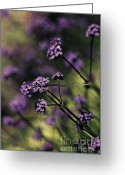 Artography Greeting Cards - Lavender Garden I Greeting Card by Jayne Logan