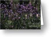 Greens Framed Prints Greeting Cards - Lavender Garden II Greeting Card by Jayne Logan Intveld