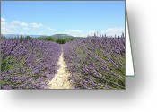 Dirt Road Greeting Cards - Lavender In Provence Greeting Card by Thomas Chung Siu Chung