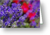 Green. Organic Greeting Cards - Lavender Greeting Card by Rona Black