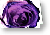 Purples Digital Art Greeting Cards - Lavender Rose Greeting Card by Marsha Heiken
