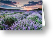 Agriculture Greeting Cards - Lavender Sea Greeting Card by Evgeni Dinev