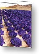 South France Greeting Cards - Lavender Study - Marignac-en-Diois Greeting Card by Anastasiya Malakhova