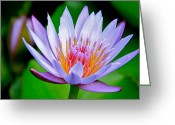 ; Maui Greeting Cards - Lavender Water Lily  Greeting Card by Karon Melillo DeVega