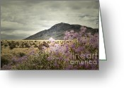 Autumn Photographs Greeting Cards - Lavender Wild Greeting Card by Andrea Hazel Ihlefeld