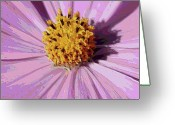 Pink And Purple Greeting Cards - Layers of a Cosmos Flower Greeting Card by Carol Groenen
