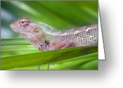 Wild Lizard Greeting Cards - Lazy Chams Greeting Card by (c)Vistas from Soni Rakesh