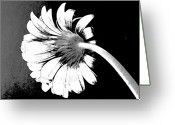 Decor Floral Picture Cards Greeting Cards - Lazy Daisy Greeting Card by Marsha Heiken