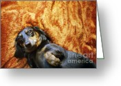 Lazy Dogs Greeting Cards - Lazy Dog Greeting Card by Angel  Tarantella