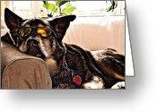 Lapdog Greeting Cards - Lazy Dog Greeting Card by Jim DeLillo