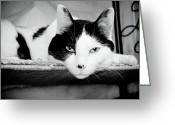 Black And White Cat Greeting Cards - Le Cat Greeting Card by Andee Photography