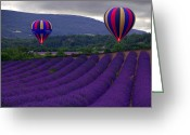 Lavender Greeting Cards - Le Matin Greeting Card by John Galbo