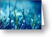"\""aimelle Photography\\\"" Greeting Cards - Le Reveil 03 Greeting Card by Aimelle"