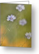 "\""blue Flowers\\\"" Greeting Cards - Lead Singer Greeting Card by Rebecca Cozart"