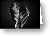 Black And White Photos Mixed Media Greeting Cards - LEAF - Black and White Closeup Nature Photograph Greeting Card by Artecco Fine Art Photography - Photograph by Nadja Drieling