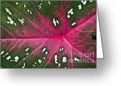 Red Leaves Greeting Cards - Leaf Detail Greeting Card by Heiko Koehrer-Wagner