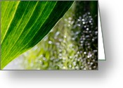 Glass Beads Greeting Cards - Leaf Edge Greeting Card by Michel Soucy