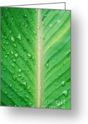 Grass Greeting Cards - Leaf green Greeting Card by Kristin Kreet