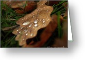 Dew Greeting Cards - Leaf in autumn. Greeting Card by Bernard Jaubert